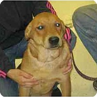 Adopt A Pet :: Harris - Foster Needed! - kennebunkport, ME