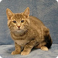 Adopt A Pet :: Jill - Sacramento, CA