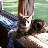 Adopt A Pet :: Solo - Lombard, IL