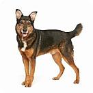 Adopt A Pet :: LUKE