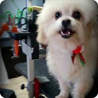 Adopt A Pet :: Bernard - Miami, FL