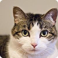 Adopt A Pet :: Caroline - Lincoln, NE