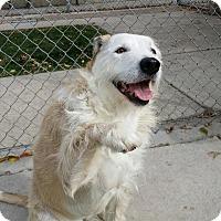 Adopt A Pet :: Peanut - Ogden, UT