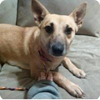 Adopt A Pet :: Shian - Rexford, NY