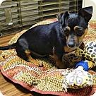 Adopt A Pet :: Huey