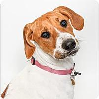 Adopt A Pet :: Paisley - San Luis Obispo, CA