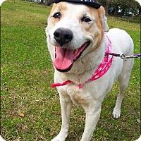 Adopt A Pet :: Riley - N - Huntington, NY