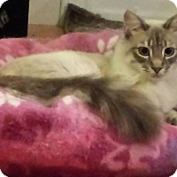 Adopt A Pet :: Frosty - Mountain View, CA
