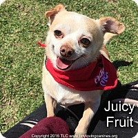 Adopt A Pet :: JuicyFruit - Simi Valley, CA