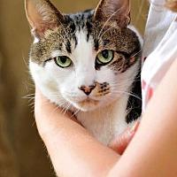 Adopt A Pet :: Loving Louie - San Francisco, CA