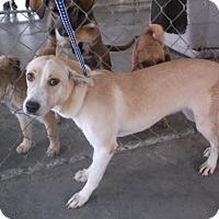 Adopt A Pet :: Bella - Bonifay, FL