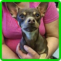 Adopt A Pet :: Suzo - Albuquerque, NM