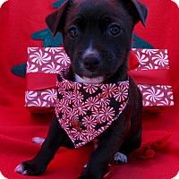Adopt A Pet :: Cameron - Irvine, CA