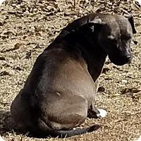 Adopt A Pet :: Tinker Bell - Denton, TX