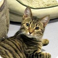 Adopt A Pet :: Hillary - Lafayette, NJ