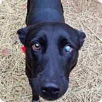 Adopt A Pet :: Buster - Kingston, TN
