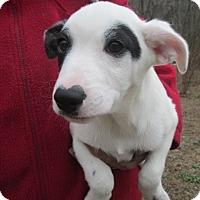 Adopt A Pet :: ETHAN - Rocky Hill, CT