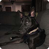 Adopt A Pet :: Lala - Nashville, TN