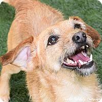 Adopt A Pet :: K-CI - Burlingame, CA