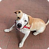Adopt A Pet :: Zeke - Washington, DC