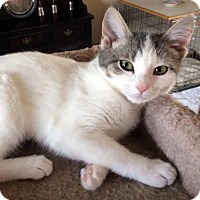 Adopt A Pet :: Baby - Columbia, IL