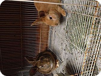 Other/Unknown Mix for adoption in Lower Burrell, Pennsylvania - Bunnies