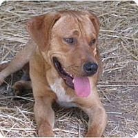 Coonhound/Staffordshire Bull Terrier Mix Dog for adoption in Snellville, Georgia - Dellis