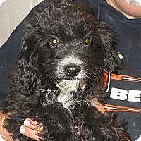 Adopt A Pet :: Beaumont - Greenville, RI