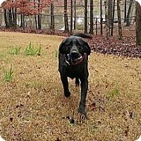 Adopt A Pet :: Maggie - Foster, RI