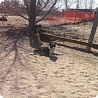 Adopt A Pet :: Mattie - Phelan, CA