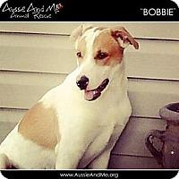 Adopt A Pet :: Bobbie - Sarasota, FL