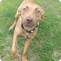 Adopt A Pet :: Belle - Rome, NY