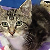 Adopt A Pet :: Octavius - Redondo Beach, CA