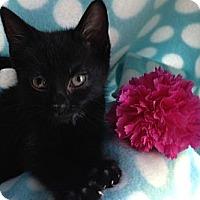 Adopt A Pet :: Dot - Union, KY