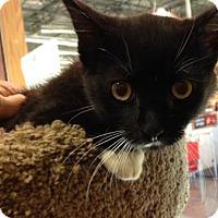Adopt A Pet :: Jewel - Morgan Hill, CA