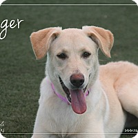 Adopt A Pet :: Ginger - Rockwall, TX