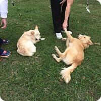 Adopt A Pet :: Joseph - Charlemont, MA