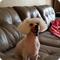 Adopt A Pet :: Ridley - Weeki Wachee, FL