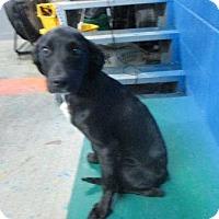 Adopt A Pet :: Midnight - available 5/30 - Sparta, NJ