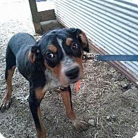 Adopt A Pet :: Jill - Manchester, CT