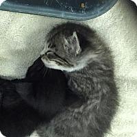 Adopt A Pet :: Trix - Waycross, GA