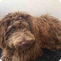 Adopt A Pet :: Cappy - Simi Valley, CA