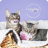 Adopt A Pet :: Bonnie and Clyde - Apache Junction, AZ