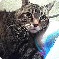 Adopt A Pet :: Thor - Dallas, TX