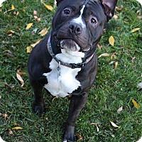 Adopt A Pet :: Moonshine - Manitowoc, WI