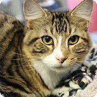 Adopt A Pet :: Swish - Sarasota, FL