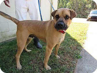 Shepherd (Unknown Type)/Boxer Mix Dog for adoption in Rome, Georgia - 16D-1615 (10/27)