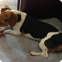 Adopt A Pet :: Zimba - Tampa, FL