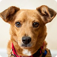 Adopt A Pet :: Ronda (Has Application) - Washington, DC