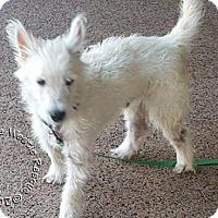 Adopt A Pet :: Duffy - Ponte Vedra Beach, FL
